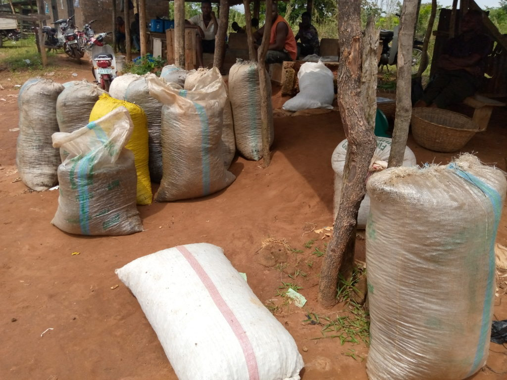 A bag of Cashew nut remaining beside bags of Palm nut kernel at Ekegbo Achi